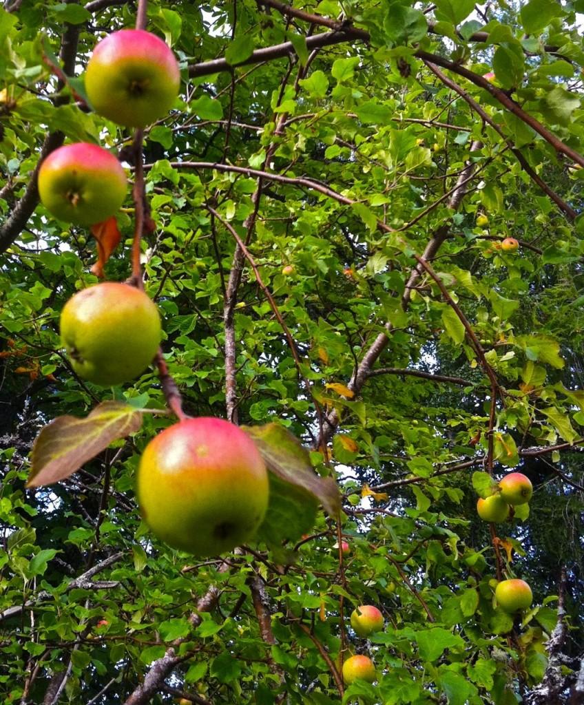 äpplena säger