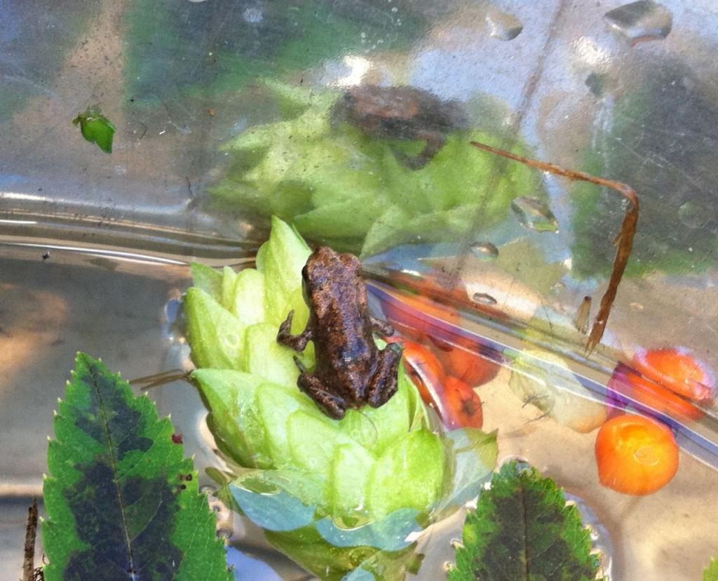 grodor o rönnbär