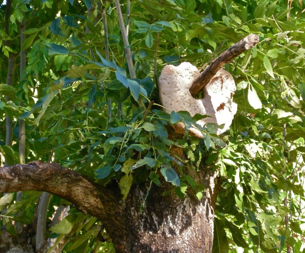 brödträd