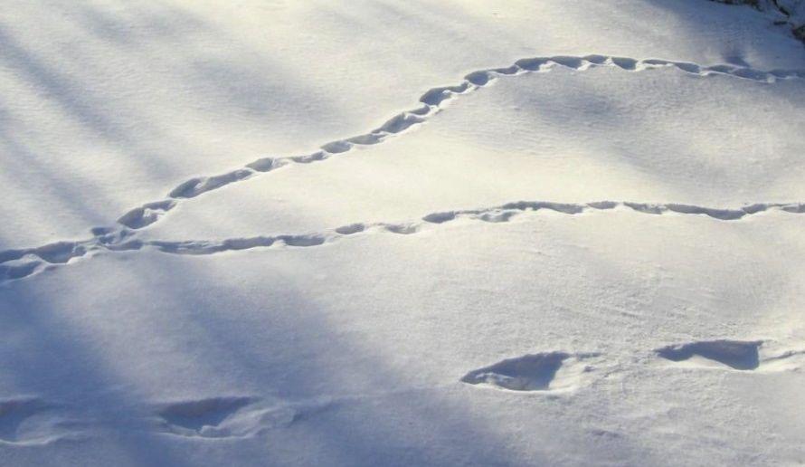 spår i snö3