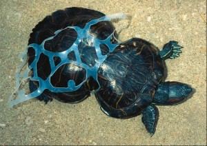 sköldpadda inplastad