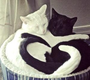 katt svart vit hjärta