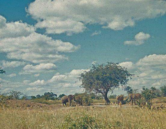 mombasabilder 4