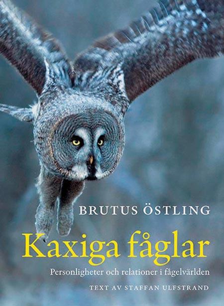 Kaxiga_faglar_Brutus_Ostling