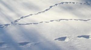 spår i snö2 (2)