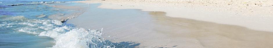 strandskvalp