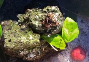 grodor och hallon