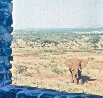 elefant lodge