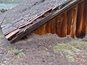 Delar av myrstack under flytt