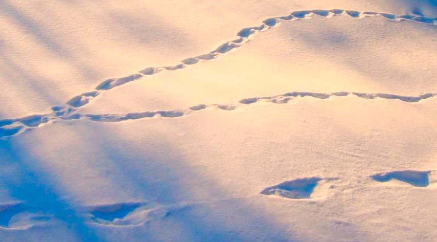 spår i snö2 (1)
